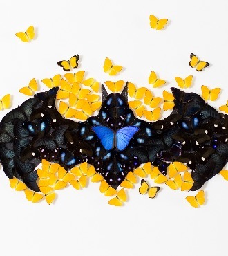 "Batman - Acrylic drawing on paper with mounted butterflies - 55""x47""x3,9"""